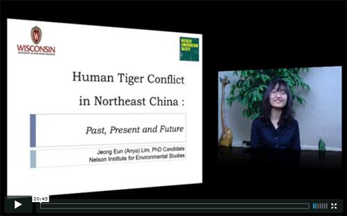 humantigerconflict_video